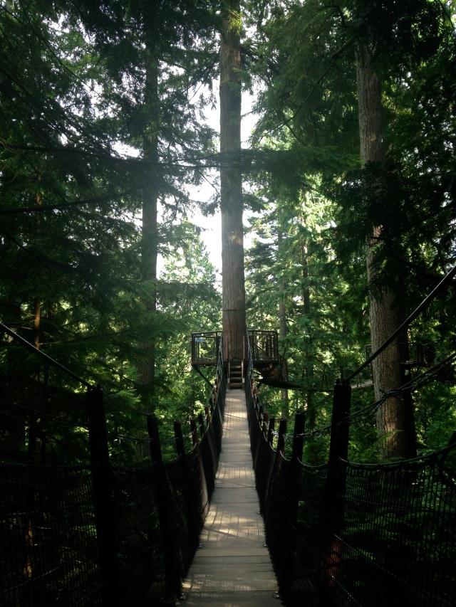 Vancouver Tree Tops Capilano
