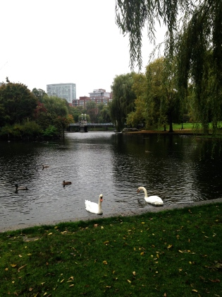 Public Garden Swans Boston | Scones in the Sky