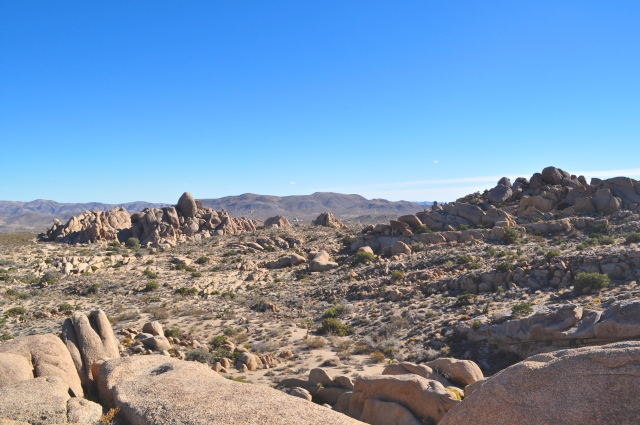 Joshua Tree National Park | Scones in the Sky